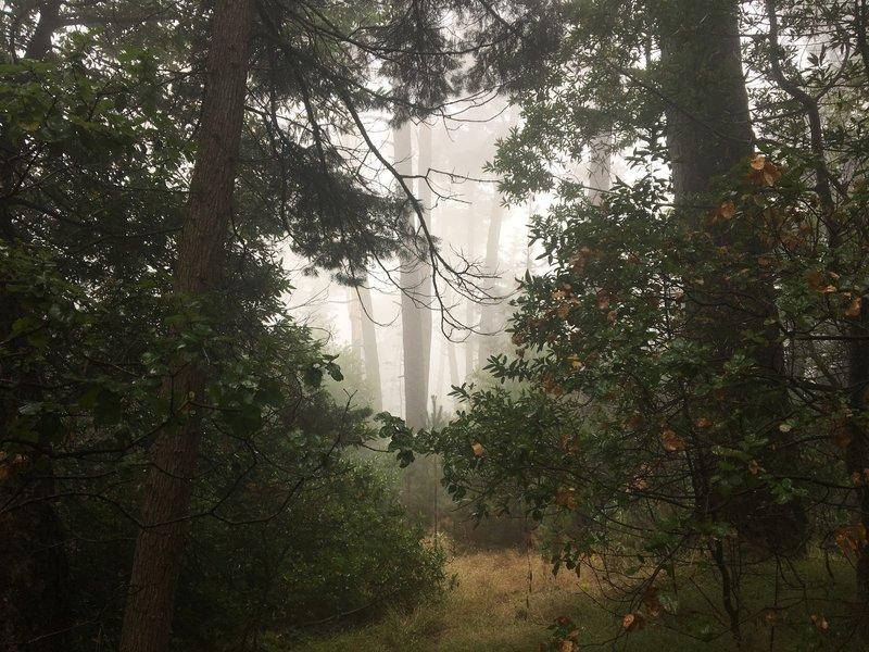Misty morning at Miller Park, Saturday 9th Sept.