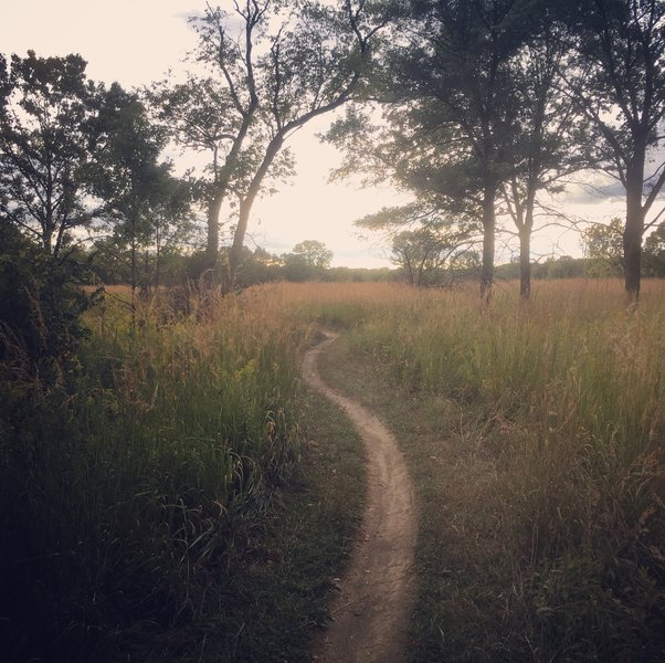 Palos trail leading to late-summer meadow.