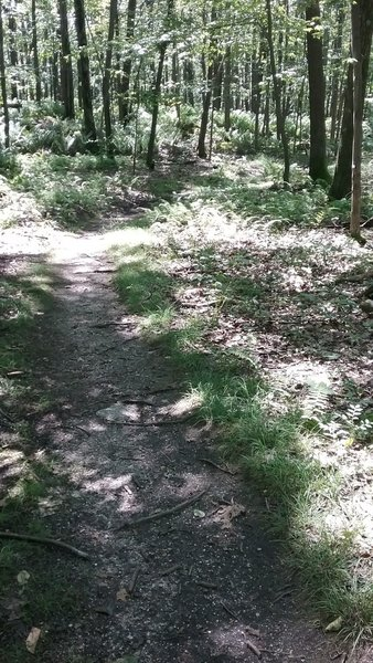 The trail is pretty smooth through here.