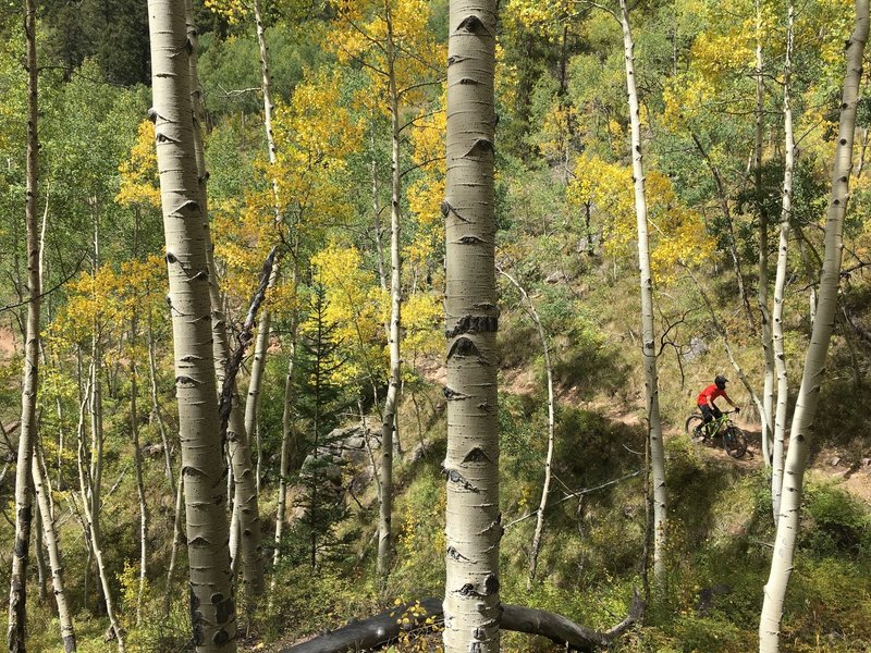 Diving down into the aspens