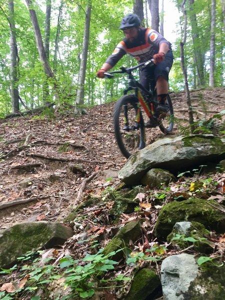 Lower Rock & Root Garden on Hickory Ridge Trail