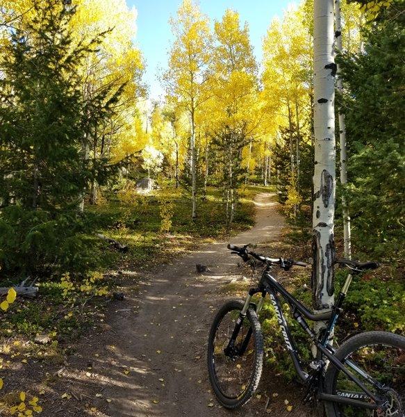 Aspen Grove on Mule Trail 9-22-2017
