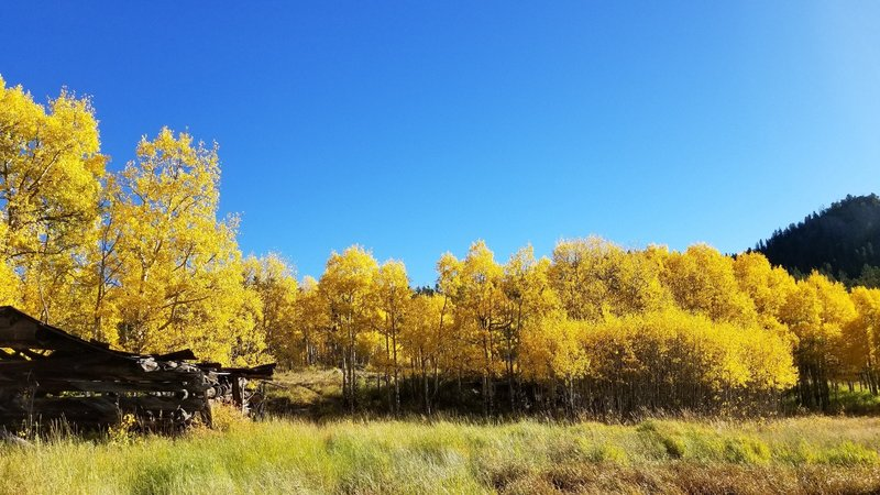 Aspen meadow with old cabin along Mule Trail 9-22-2017