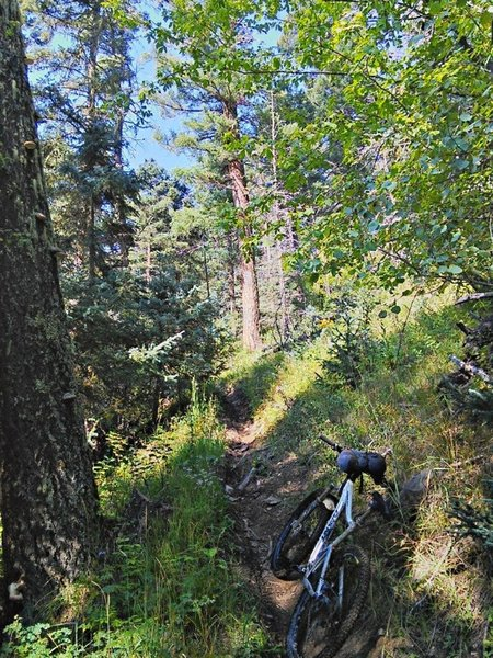 Steep singletrack above the meadow