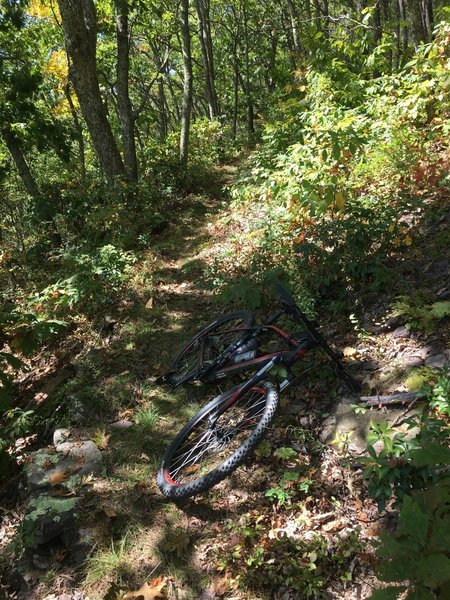 What the trail mainly looks like.