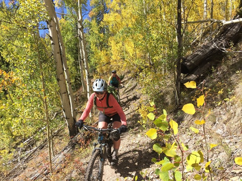 Rolling through an aspen tunnel on Silver Creek.