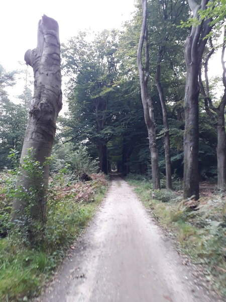 Some unpaved forest roads like these