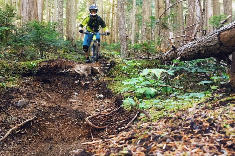 Micro Climate blends a beautiful forest setting with a rough and fun singletrack.