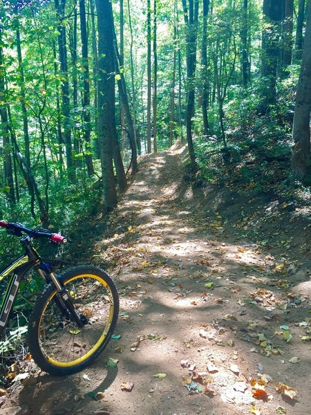 Brand new section of trail on Little Yellow Mountain Loop.
