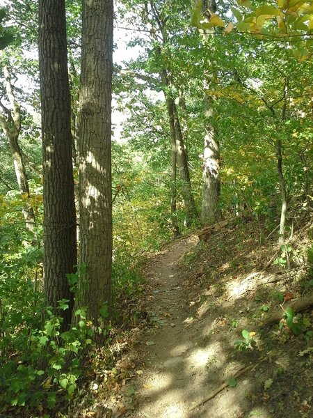 One of the funner sections of trail. Ride along the ridge, just don't fall off the trail.