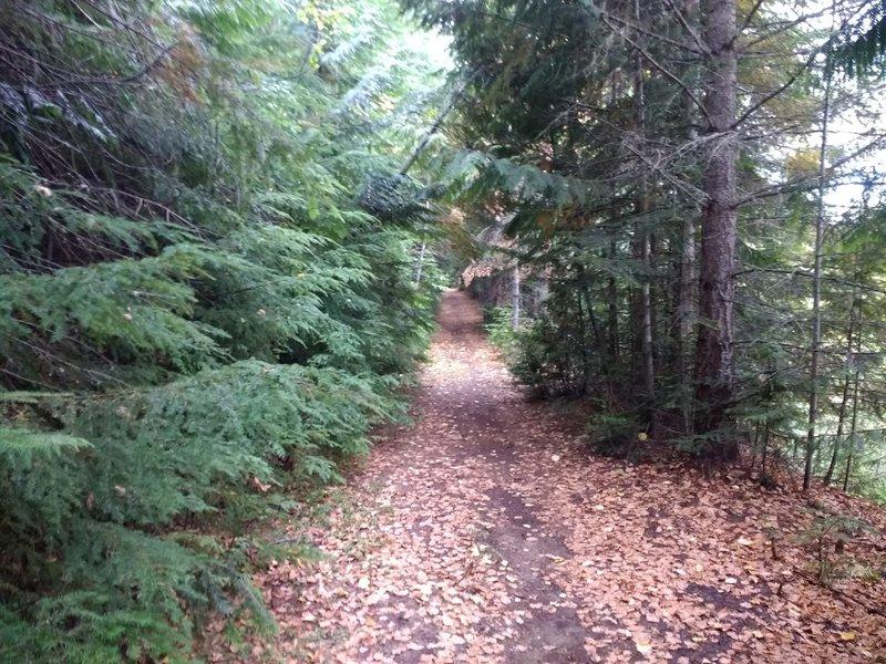 Beautiful canopied trail