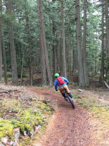Mountain Lake Trail, opening turn.