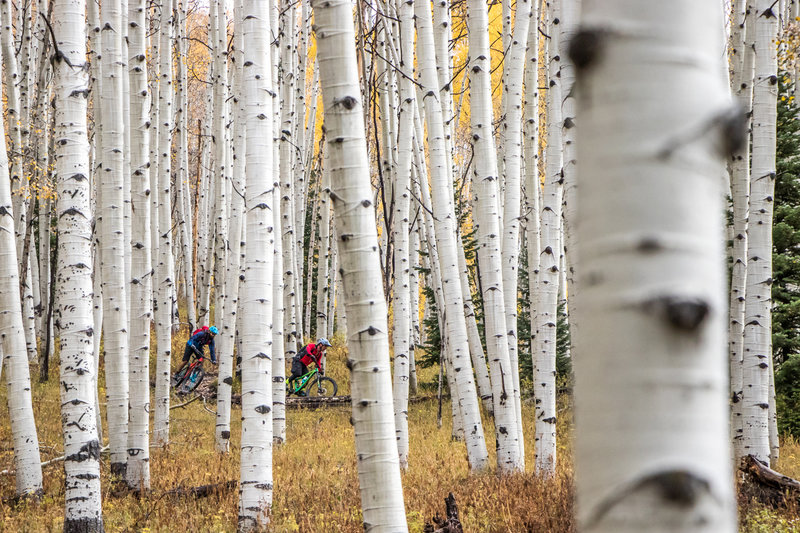 The Gunsight Trail is fast, flowy, and has more aspens than you can dream of. Wow.