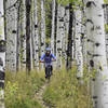 Aspens going off! During a memorable finish through the aspens at the trails end.