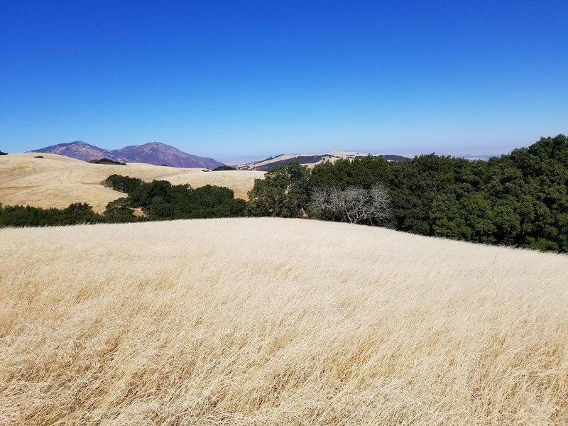 Mount Diablo from Morgan Territory.