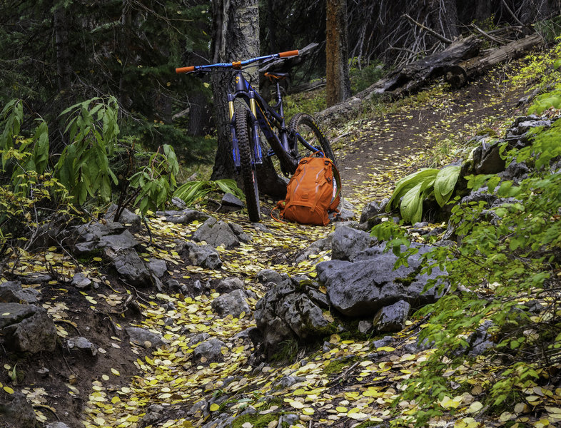 some of fabulous singletrack perfectly covered with falls color