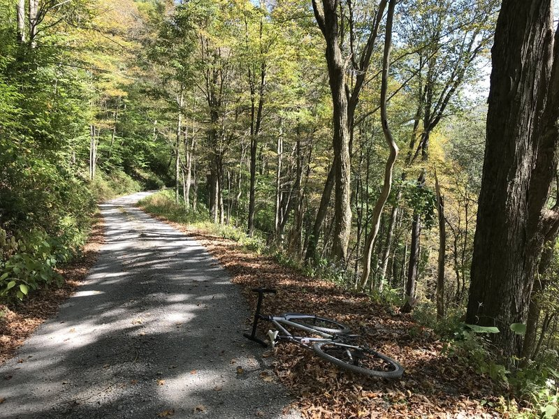 Fall leaves on the long climb up Canaan Loop road