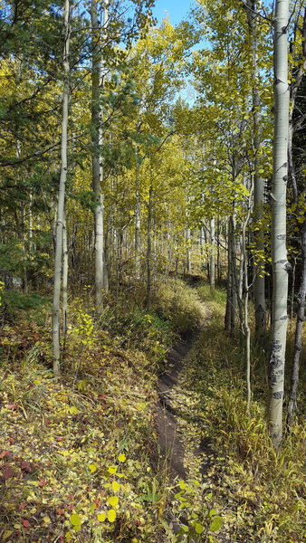 Fall colors on the Sherwood Gulch singletrack.