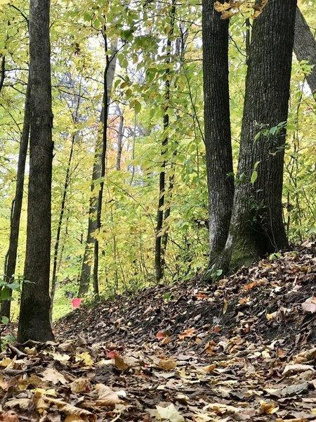 Fall at WTR