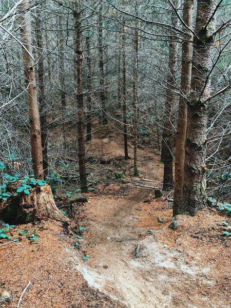 Twisting through the Lower Mirkwood trail.