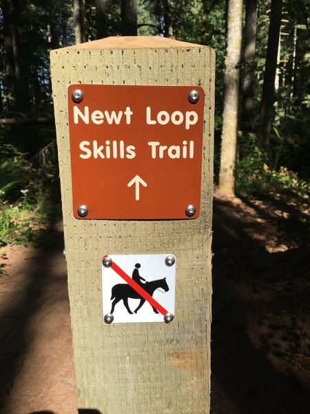 Welcome to Newt Loop!