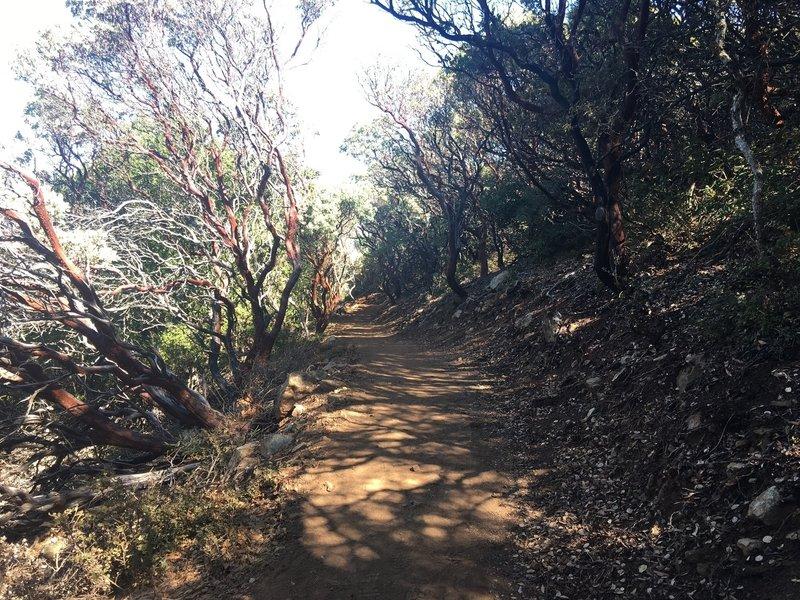 Along the Mount Umunhum Trail.