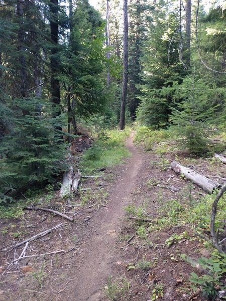 This is a typical view of the trail.