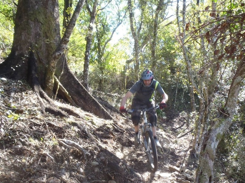 Roots are part of the challenge on Te Ara Koa, especially the top section of the trail