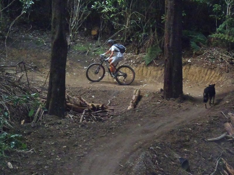 Climbing up the well-graded Alpha Trail in the Silvan Forest.
