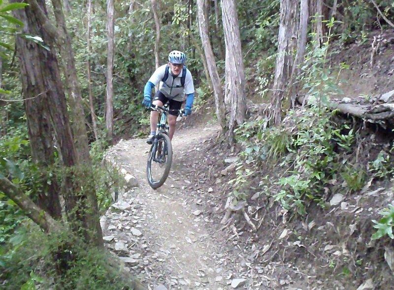 Native bush lines Involution Trail.