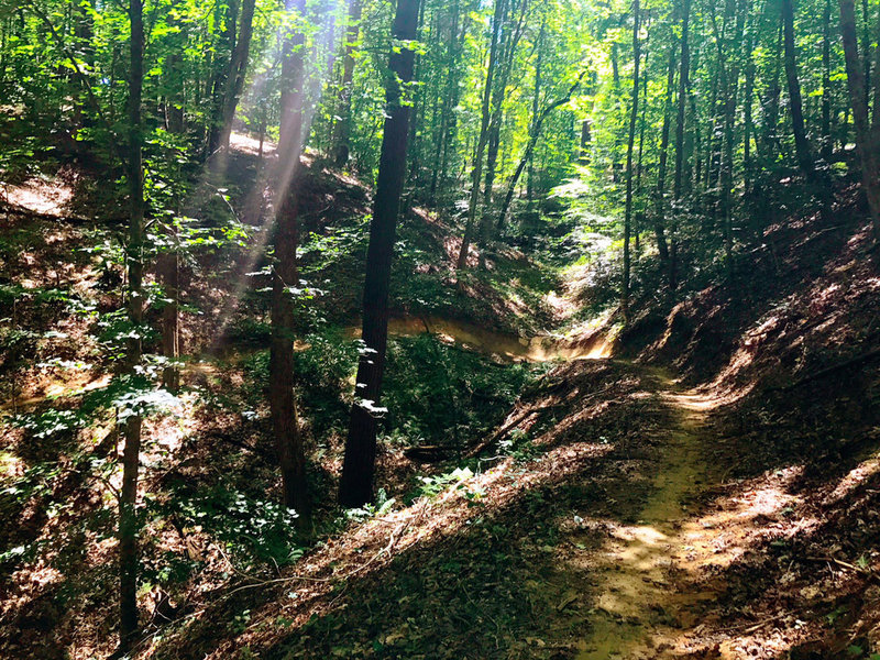 Sun dappled berms at Warrior Creek.