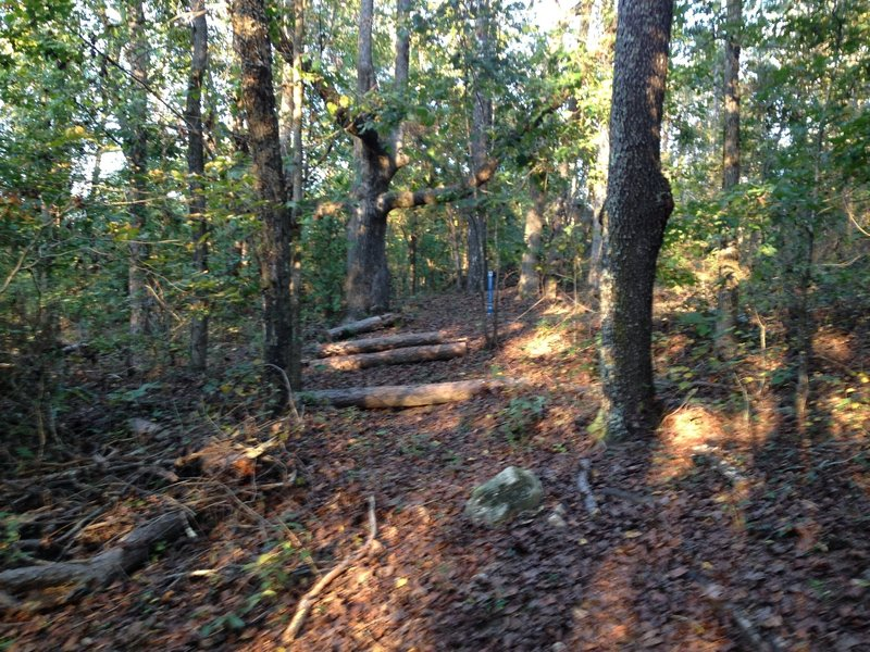 Start of the Turkey Creek Down Hill. Be on the lookout for these logs. Easy to miss if you are going clockwise.