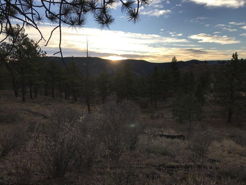Overlooking non-burned portion of the Buffalo Creek Burn Area