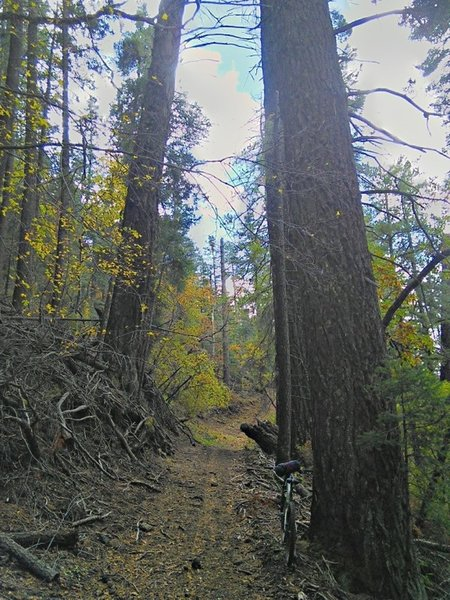 Getting up into the singletrack and big trees.