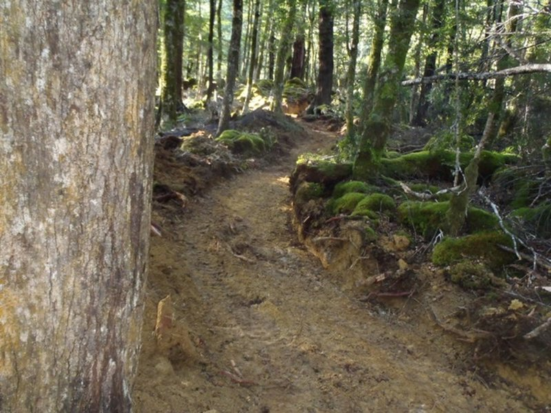 The trail surface still raw during the construction phase