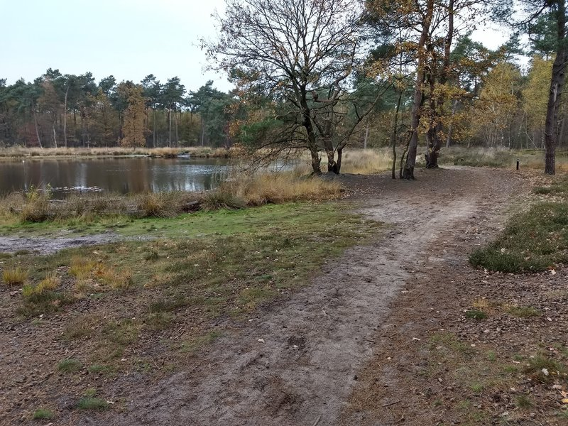 One of the fens on the Papenvoortse Heide. The path on the right is part of the blue MTB trail.