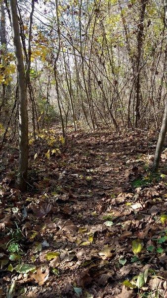 Twisty singletrack through the trees