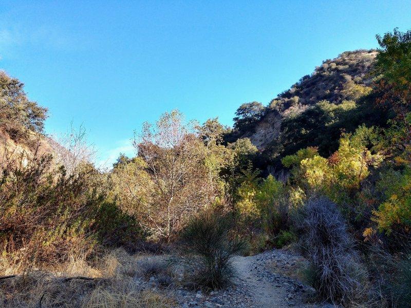 Fun, winding creekbed trail through the trees.