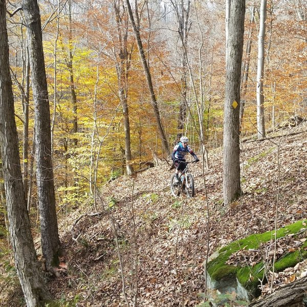 Little undergrowth makes for great views through the woods. Hit it before the leaves fall, though, or be prepared for a slower, more technical ride.