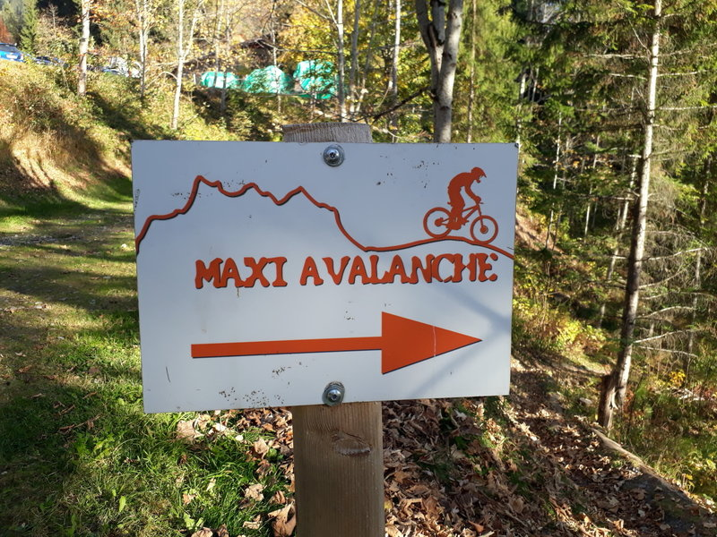 The start of Maxi Avalanche; not for the faint of heart (I had to do some walk-a-bike down certain sections).