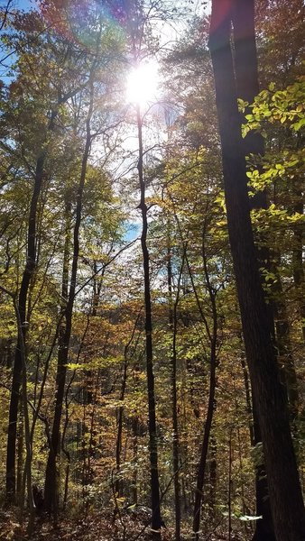 Sunlight through the treetops.