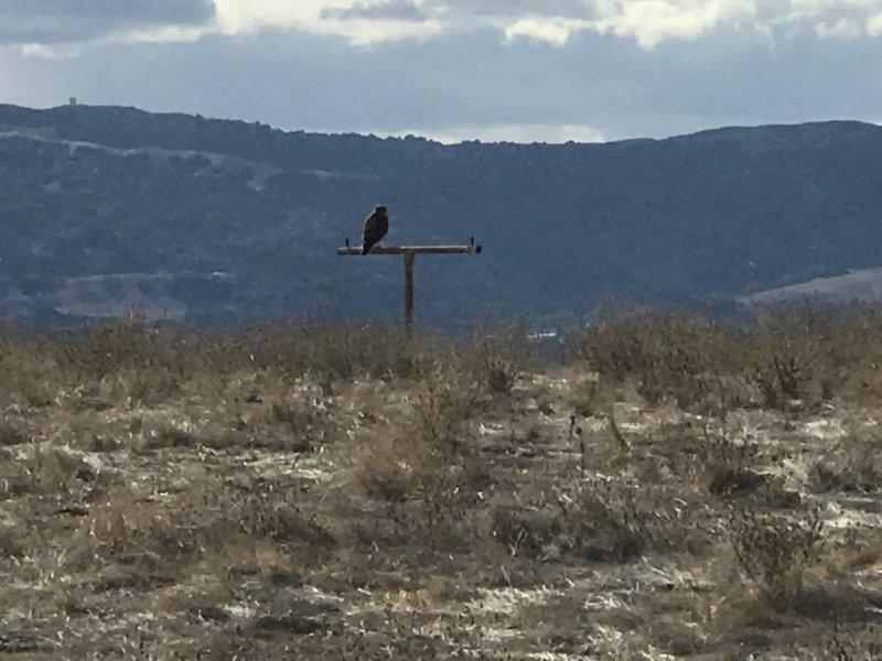 Overlook has a Hawk perch