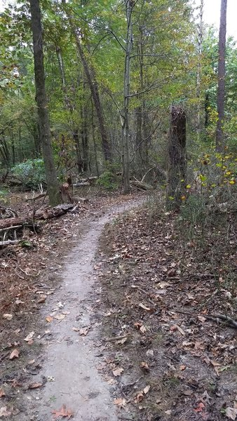 As the trail moves deeper into the forest