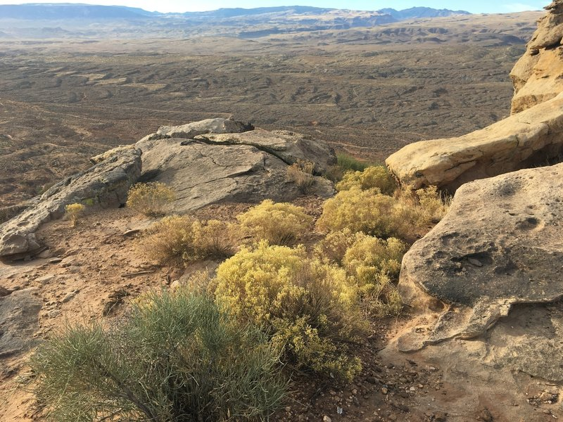 Overlooking Bearclaw Poppy Preserve.