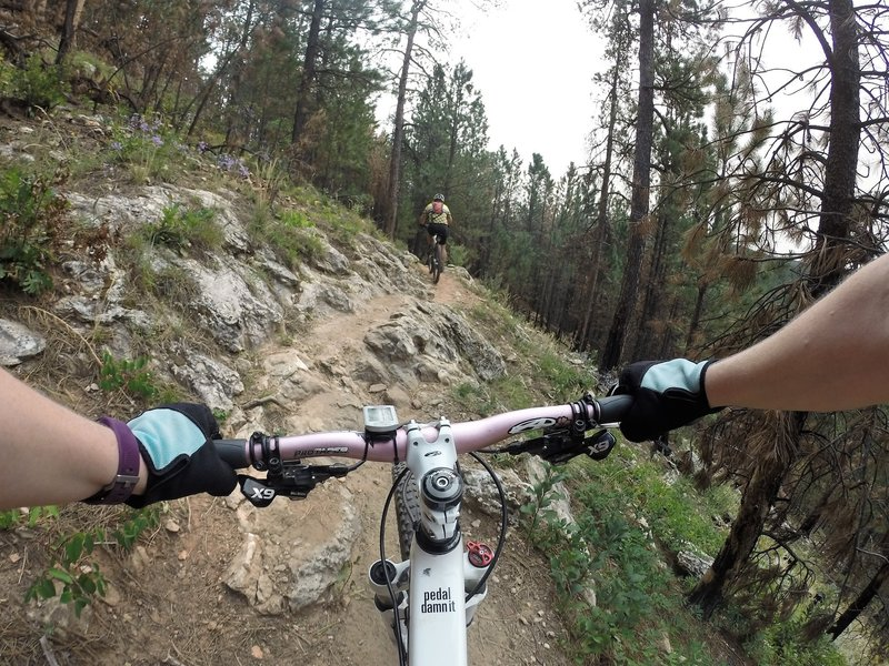 Middle 1/3 of trail fun riding with frequent rock/root outcroppings to keep you on your toes.