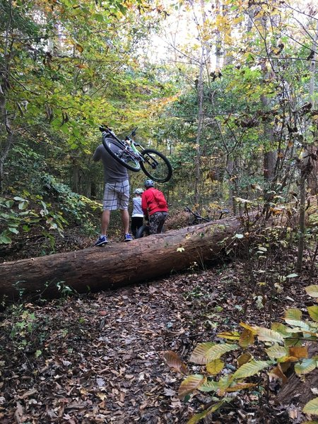 Headed north from parking--- go sharp left at 1st fork or encounter a mess of big tree falls