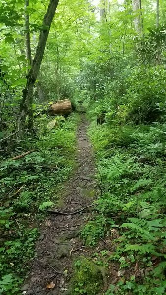 Tight and rooty singletrack.