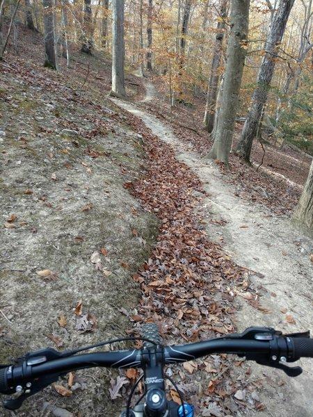 Late Fall Flow on Loop 2