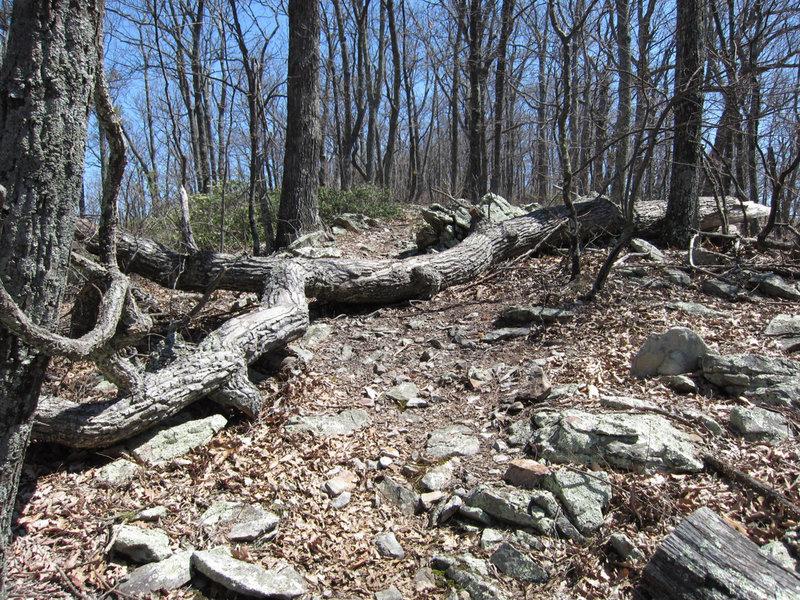 North Mountain rocky ridge
