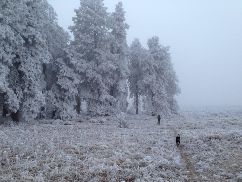 Hoar Frost on Pine Oasis. Trails can be ridden when frozen but avoid when wet and soft. Ruts last years in this soil.